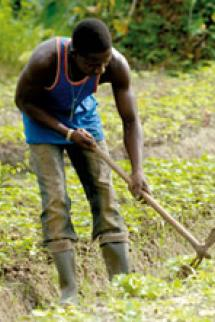 Le développement des cultures maraîchères avec l'IGAD