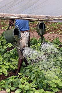 total_gabon_dvpt_agricole.jpg